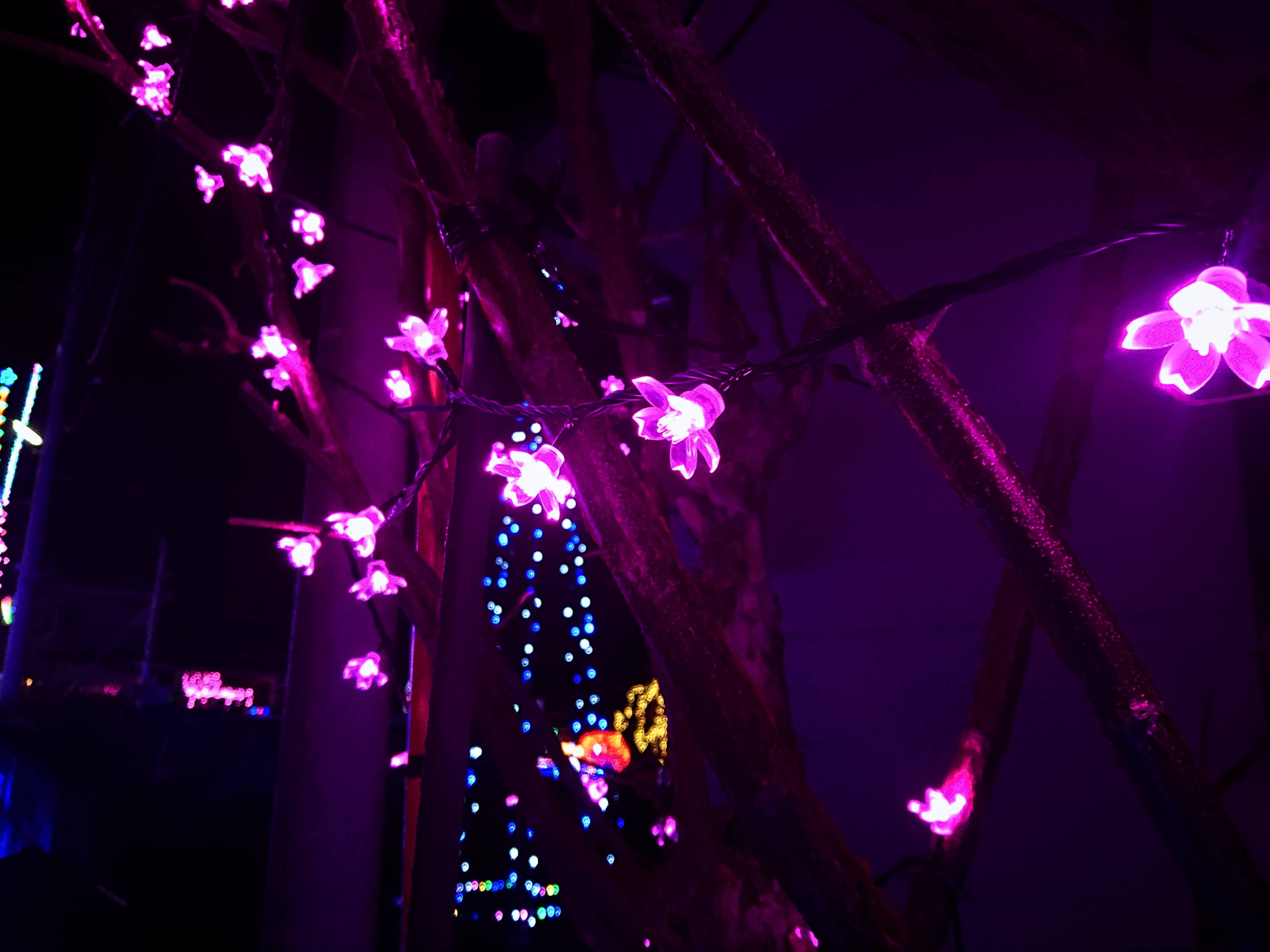 桜のイルミネーション