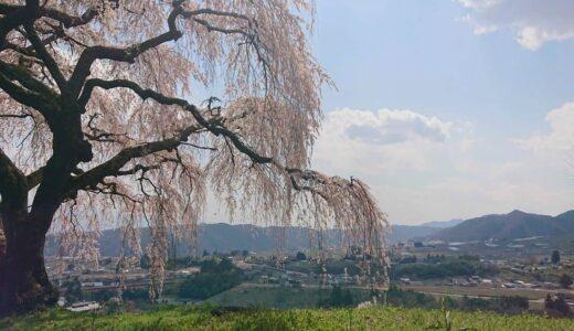 【乙ヶ妻のしだれ桜】超穴場!息をのむほどのしだれ桜と自然が織りなす絶景スポット