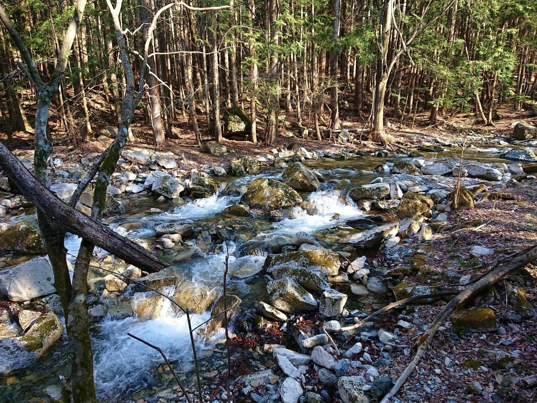 林の中にある川の様子