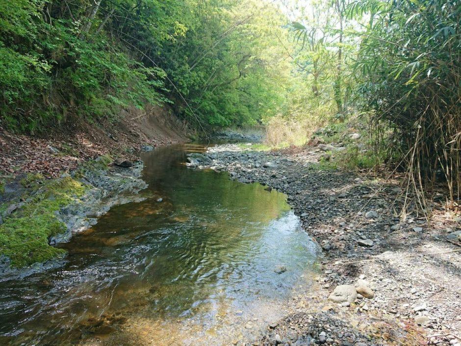 樋田川中流域の様子