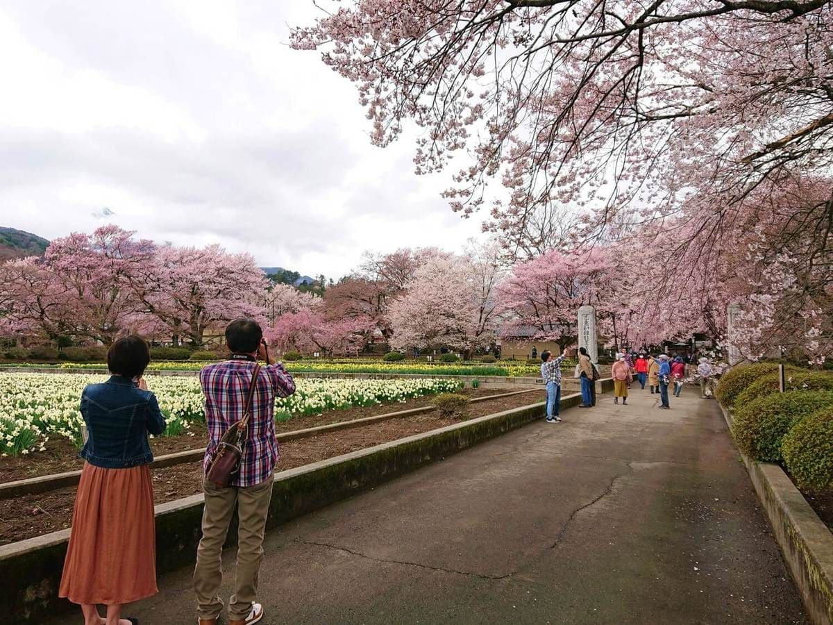 実相寺境内に咲く花