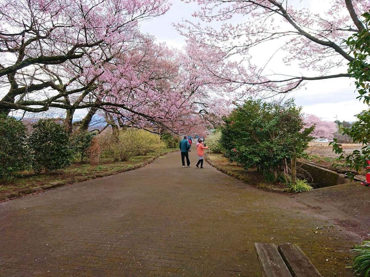神代桜(実相寺)出口への道