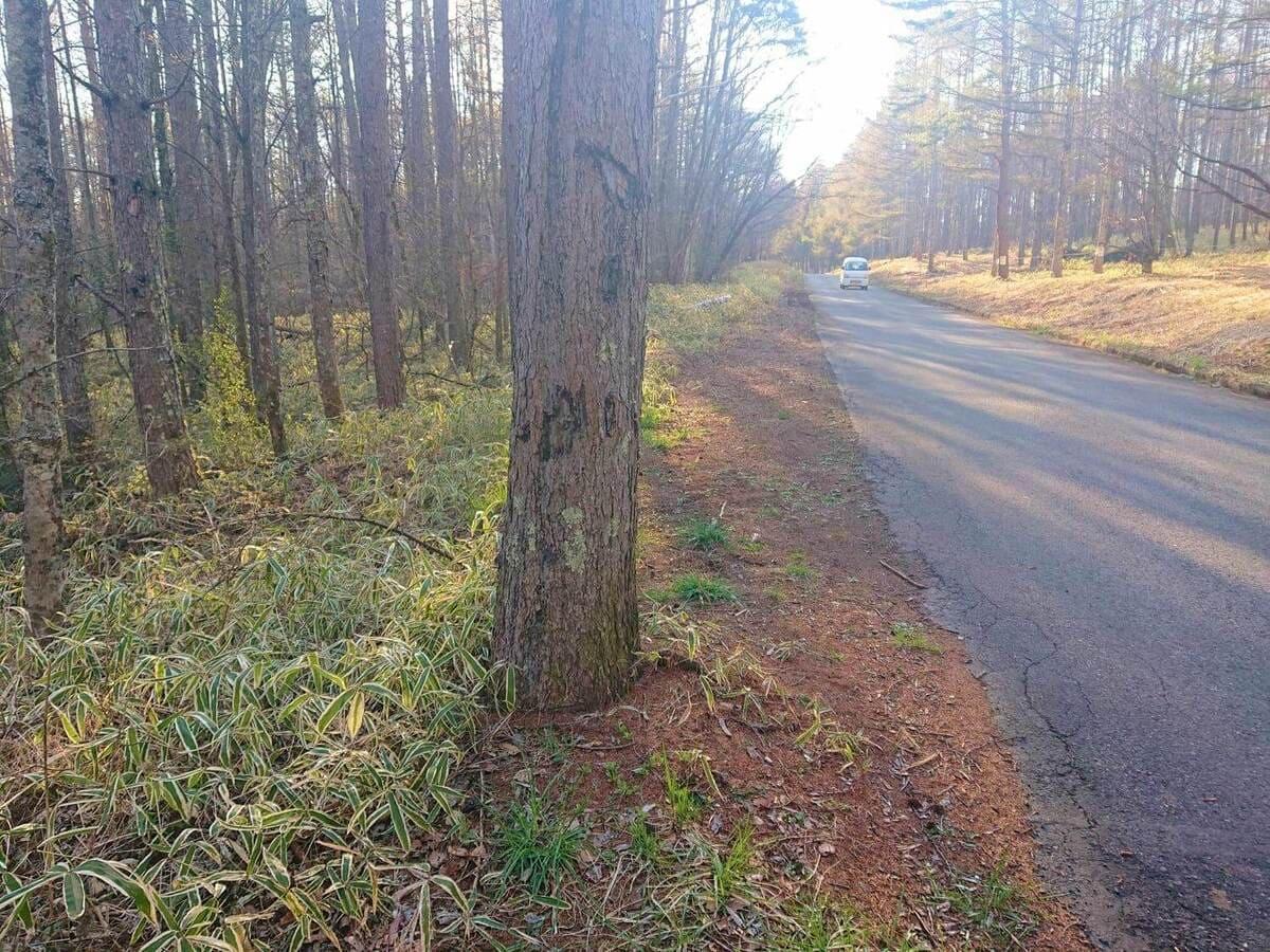 道路側に1本だけ出ている木