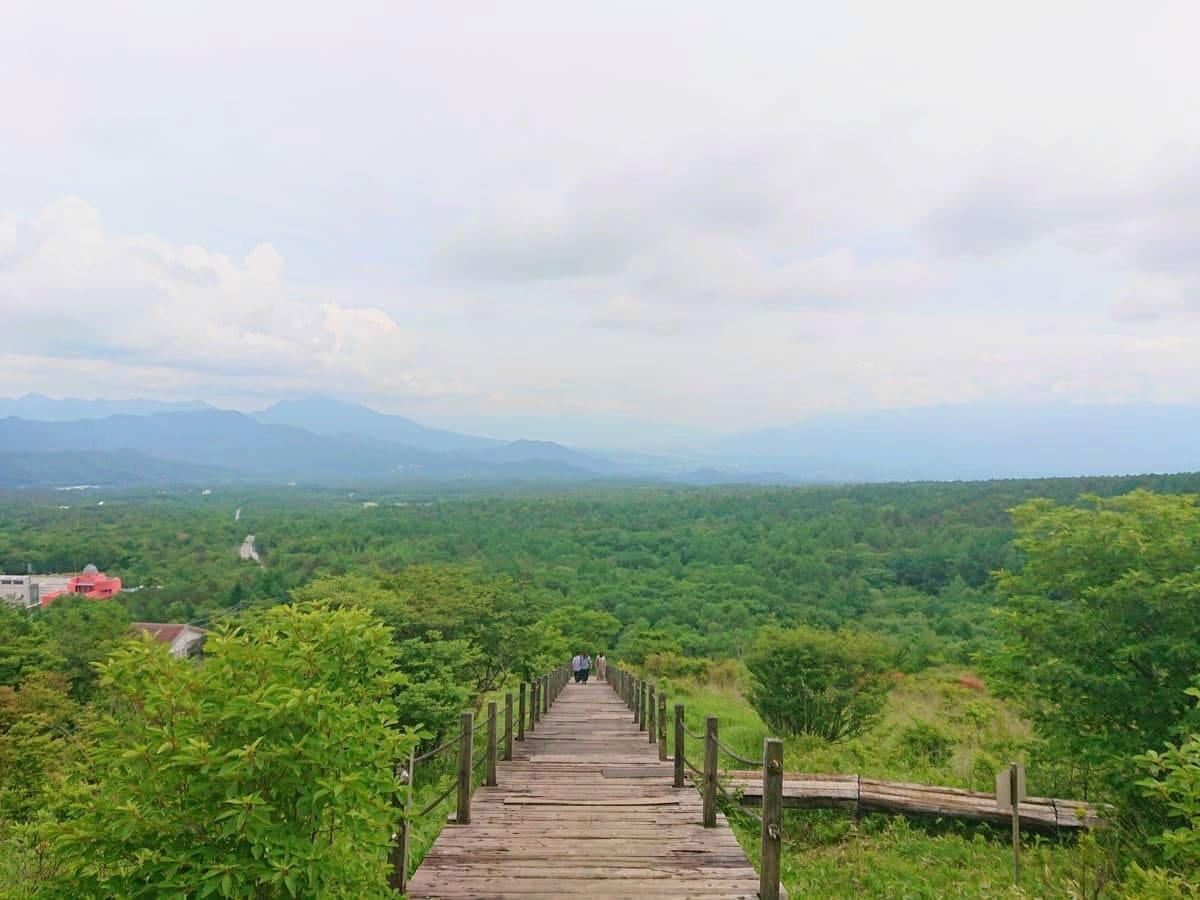 美しの森から見える絶景