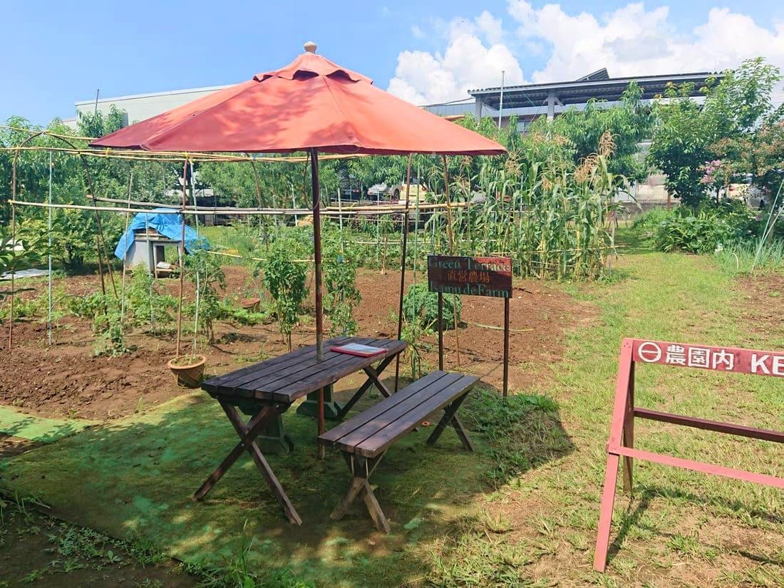 農園のすぐ横にあるテラス席