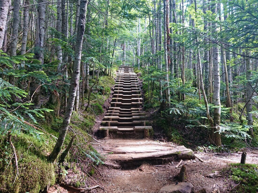 夢の庭園までの林道にある木の階段