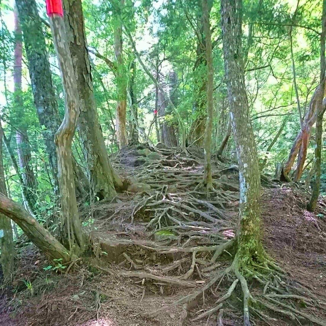 尾白川渓谷の木の階段