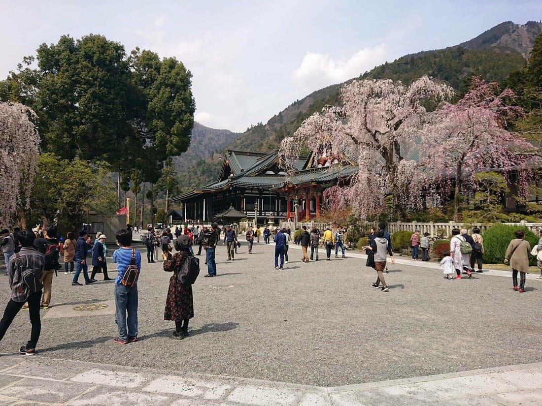 桜の時期の身延山久遠寺境内