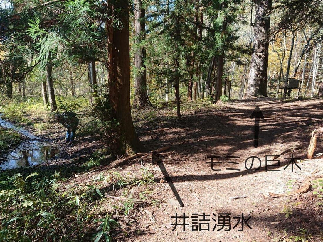 井詰湧水とモミの巨木