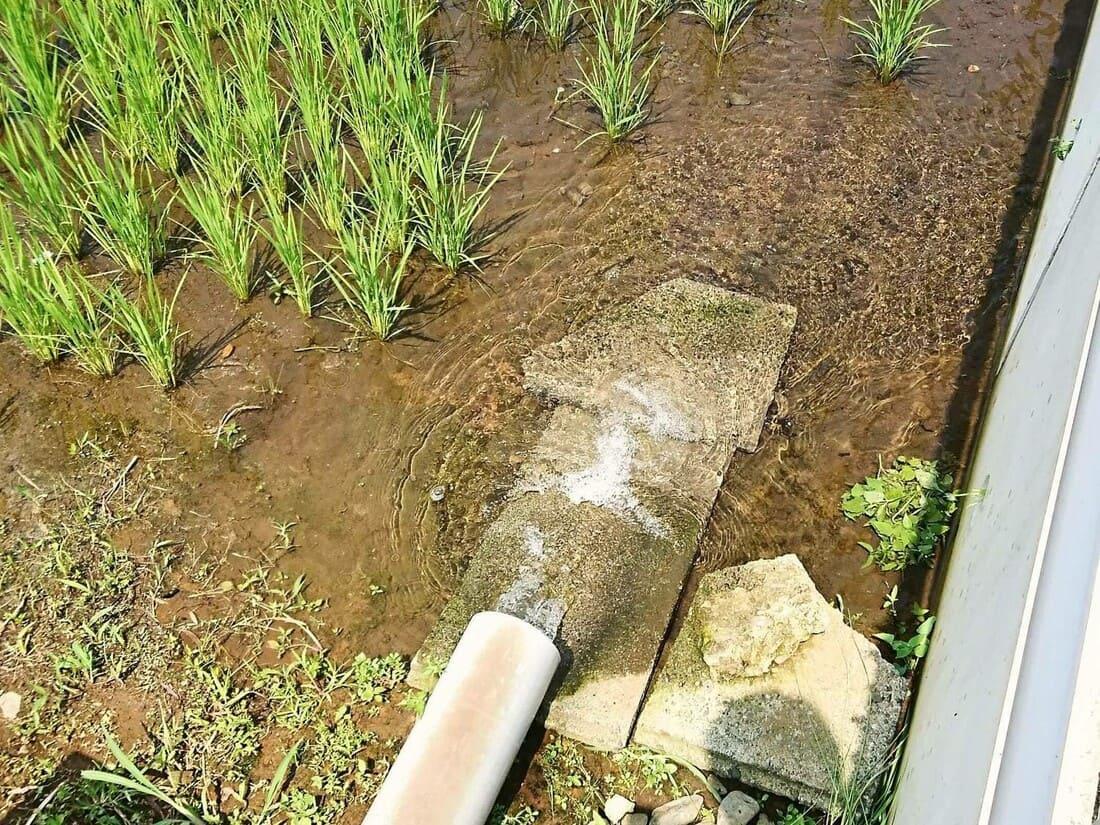 道の駅周辺にあるキレイな水が流れる田んぼ